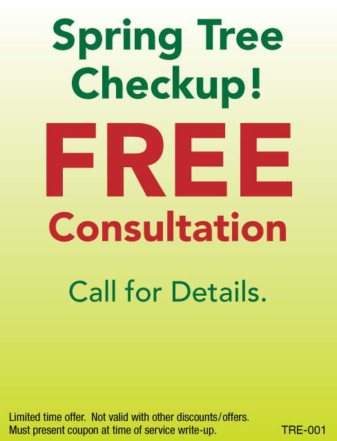 FREE Consultation, Spring Tree Checkup!
