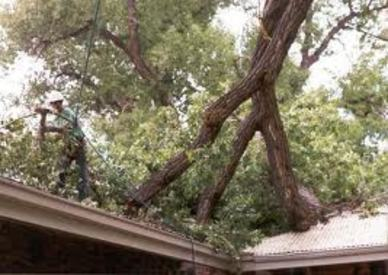 Emergency Tree Service Michigan