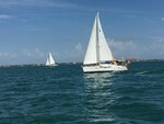 Sailing Regatta on Biscayne Bay